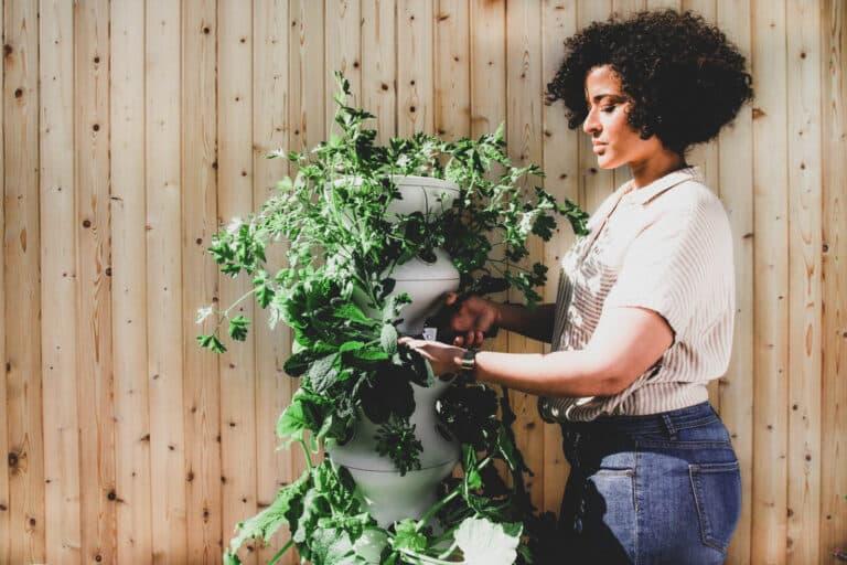 10+ Best Gardening Tips for Successful Flower Garden Design