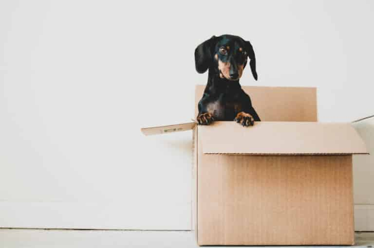 10+ Best Packing and Moving Tips